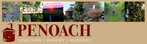 Penoach Winery Grape Harvest September 11th and September 25th