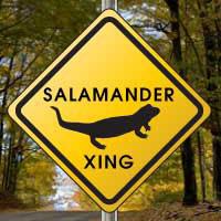Salamander Crossing Web Watch Dallas County